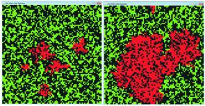 Die Verteilung der (roten) kooperierenden Tendenzen in einer sonst (defektierenden) grünen Welt nach 100 und nach 500 Runden