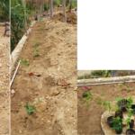 drei-pflanzungen